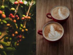 O promisiune care merită aplauze: cafea cu amprentă de carbon neutră